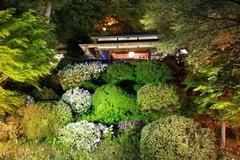 よいた「楽山苑(らくざんえん)」ライトアップ2015